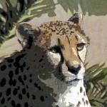"""A Closeup Cheeta"" by NaturePlusStudios"
