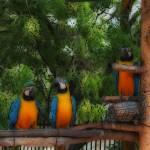 """parrots"" by elyfrank"