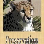 """Preservation"" by NaturePlusStudios"