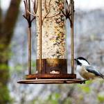 """Chickadee at feeder"" by naturephotos"