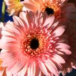 """flower"" by eddmsa"