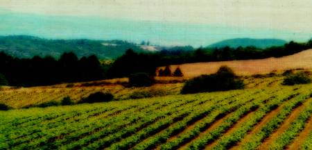 Oregon Wine Country Landscape