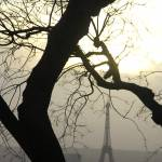 """Tree and Eiffel Tower"" by MattParry"