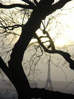 Tree and Eiffel Tower