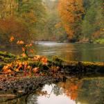 """Autumn Colors in Washington"" by PatriciaDanielPhotography"