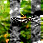 """""""Butterfly"""" by weckphotography"""