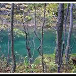 """Oirase Gorge"" by erniereyes"