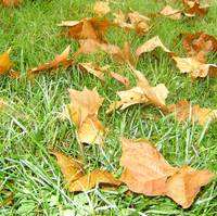 automn leaves on green grass