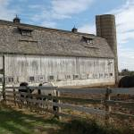 """""""Barn and Farm Horses"""" by crazyabouthercats"""