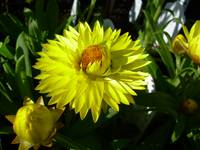 Yellow Flower Blossom