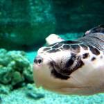 """Sea Turtle"" by lbarrett"