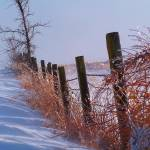 """Country Winter"" by photophotography"