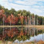 """Fall Foliage at Pawtuckaway State Park"" by digitalvisions"