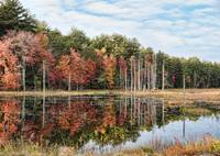 Fall Foliage at Pawtuckaway State Park
