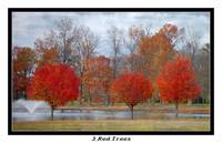 3 red trees