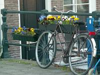 Bike with flowerbox