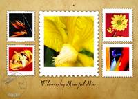 FLOWERS by NAWFAL NUR, Set ONE, Edit C