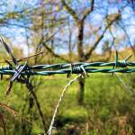 """barbed wire"" by lapideo"