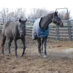 """Barn Buddys Horses"" by crazyabouthercats"