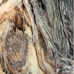 """""""Old Tree"""" by memoriesoflove"""