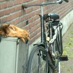 """Cat with Bike"" by BevMummery"