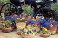 Carriage and Flowers