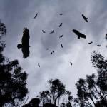 """""""cemetary sky"""" by artfilmusic"""