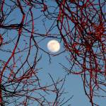"""winter tree moon"" by artfilmusic"