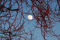 winter tree moon