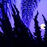 "moonrise" by artfilmusic