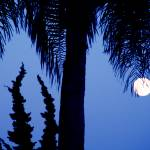 """moonrise"" by artfilmusic"