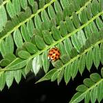 """Ladybug on Leaf"" by LISATRAVELBUG"