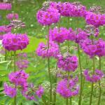"""FLOWERS IN IRELAND"" by LISATRAVELBUG"