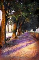 Shadows and Tall Trees - Lucca, Italy