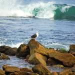 """""""Seagull, Narragansett Town Beach, RI"""" by PinakiC"""
