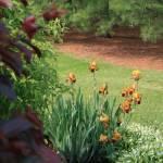 """""""Garden"""" by markrowland"""