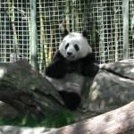 """""""Panda"""" by NancyPants"""