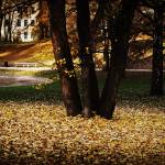 """""""Autumn in the park"""" by Vinje"""