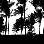 """Black Palms"" by PHOTOSRUS"