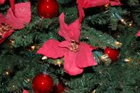 Christmas Tree Red Poinsettia