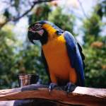 """blue and yellow parrot"" by imagineit"