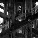 """trestle"" by kphoto"