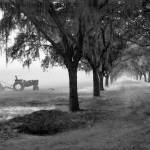 """John Deere Tractor and the Avenue of Oaks"" by Hansen"