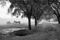 John Deere Tractor and the Avenue of Oaks