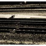 """Train Tracks"" by karmabox"