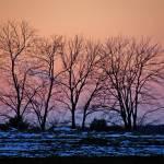 """""""Winter Trees"""" by shelshots"""
