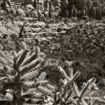 """cactus cliffs"" by billburk"