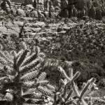 """""""cactus cliffs"""" by billburk"""