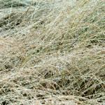 """Grass"" by billburk"