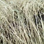 """grass 2"" by billburk"